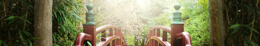 La voie du shiatsu
